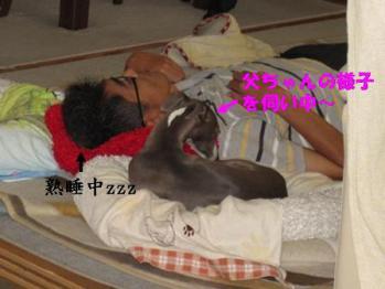 0811こまちゃん舐め舐め_01