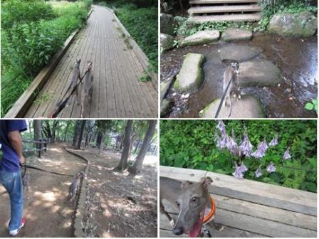 0816森林公園_01a