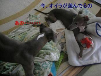0817おもちゃ_03