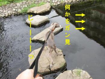 0820散歩_04