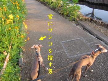 0821散歩_01