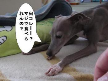 0918おはぎ_09