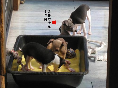 1124こまちゃん_01