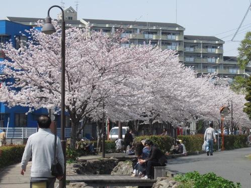 0409桜_06