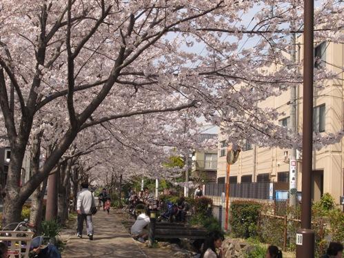 0409桜_08