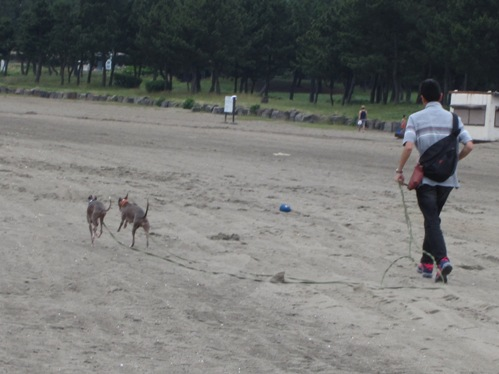 0617海の公園_03