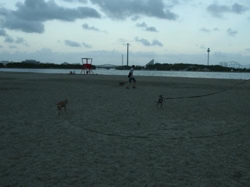0918海の公園_04
