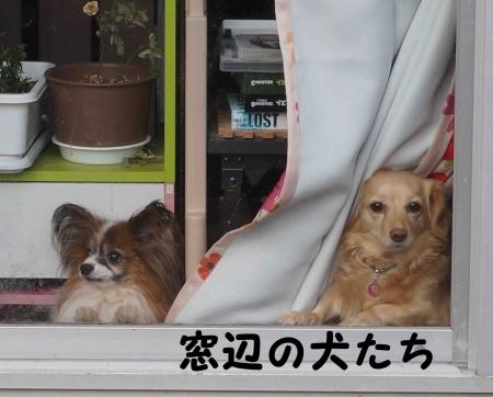おっさん犬たち