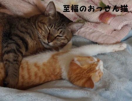 おっさん猫のしあわせ