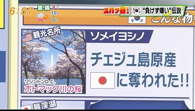 ワシントンD.C.ポトマック川の桜は日本に奪われた済州島原産の桜だ!と主張