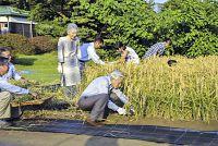 皇居内の畑で、アワと陸稲を収穫される天皇、皇后両陛下。(奥右から)秋篠宮ご夫妻の長女眞子さま、皇太子ご夫妻の長女愛子さまら、お孫さまも一緒に手伝われる(2013年9月21日)=宮内庁提供