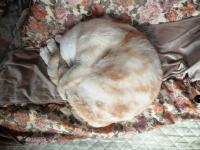 20丸まるネコ