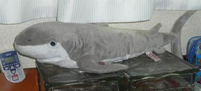 12サメおもちゃ