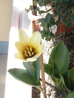 garden0329_2012_3.jpg