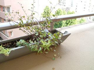 green0725_2012_1.jpg