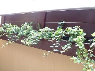 green0725_2012_3.jpg