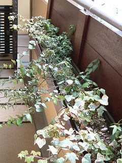 planter0307_2012.jpg