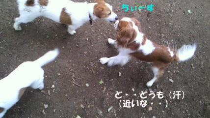20110613-10(セリフ)