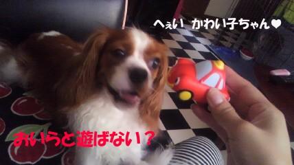 20110708-9(セリフ)