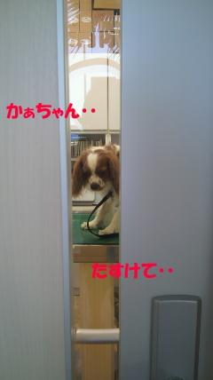 20110710-2(セリフ)