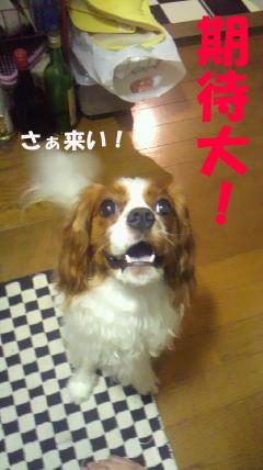 20110721-7(セリフ)