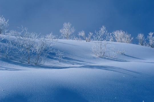 2010.01.16 樹氷