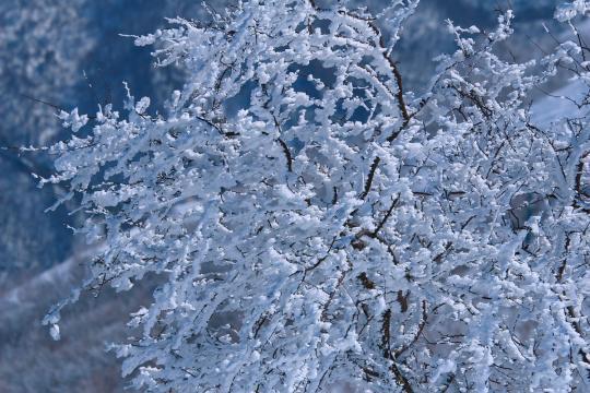 2008.03.21-風の樹-01