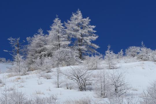 2010.02.18-樹氷-01