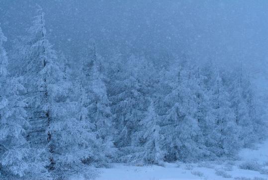 2010.03.09-雪降り-02