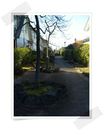 2011_1202_135942-SBSH0045.jpg