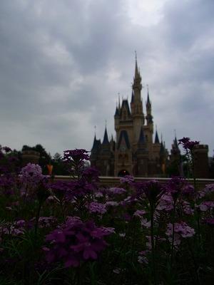 花と城_4