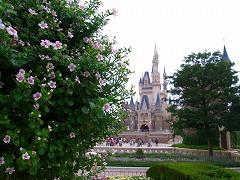 花と城_2