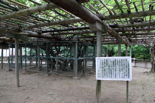 20100613_matsusaka_castle-12.jpg