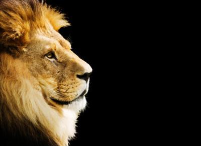 lion_convert_20101118152434.jpg