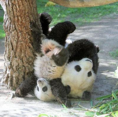 these_funny_animals_460_640_46_convert_20101015110149.jpg