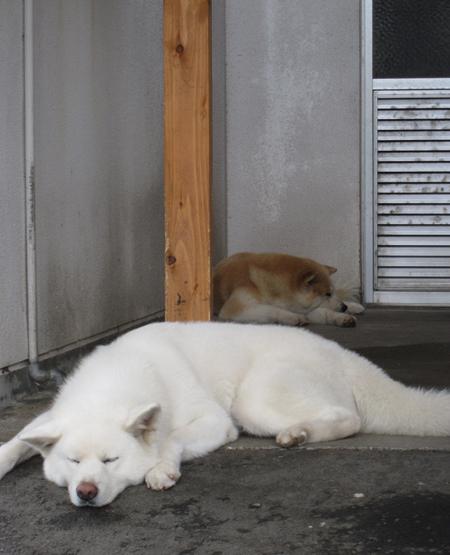 0831犬2