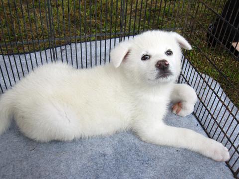 1012きりたんぽ 犬1