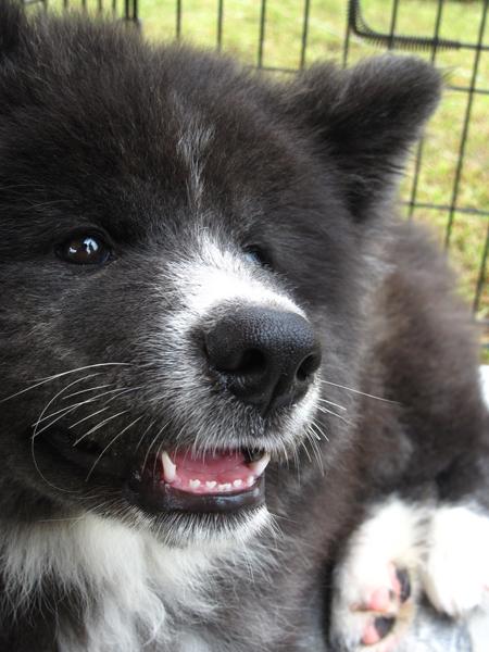 1012きりたんぽ 犬2