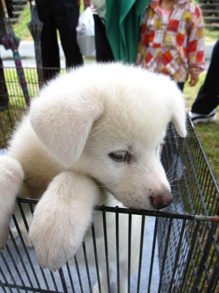 1012きりたんぽ 犬4