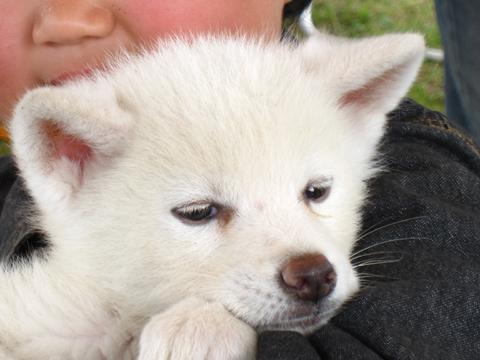 1012きりたんぽ犬6