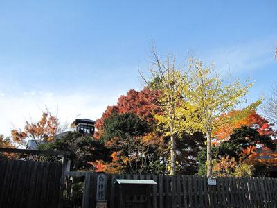 11月17日(水)の天気