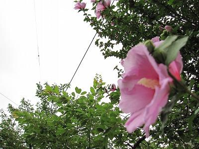 7月20日(火)の天気
