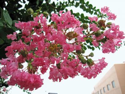 8月18日(木)の天気