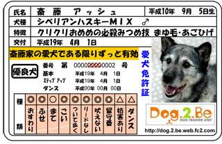 犬免許証ASCH