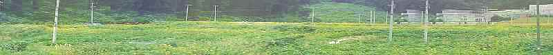 F1000082_20101020145428.jpg