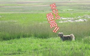 072010_Zlovinggrass.jpg