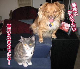 FC_guarddog.jpg