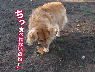 F_leaf.jpg