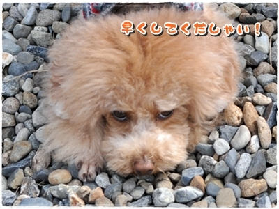 DSC_5941-01.jpg