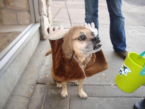 トナカイ犬